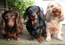 Suivez des conseils précieux pour bien accueillir les chiens dans votre magasin