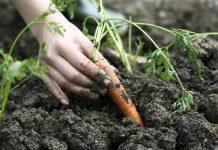 Coop de France redéfinit l'agriculture en lui donnant d'autres moyens d'évolution